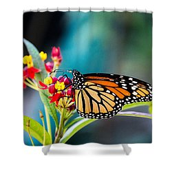 Flutter By Shower Curtain