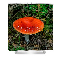 Fly Agaric Fungi Shower Curtain by Adrian Evans