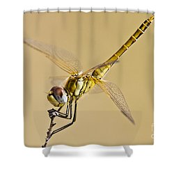 Fly Dragon Fly Shower Curtain by Heiko Koehrer-Wagner