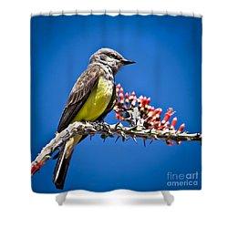 Flycatcher Shower Curtain by Robert Bales