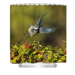 Flying Florida Scrub Jay Photo Shower Curtain