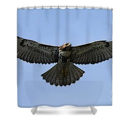 Flying Free - Red-tailed Hawk Shower Curtain