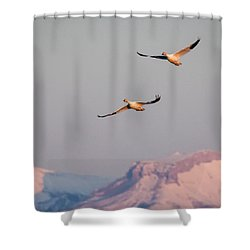 Shower Curtain featuring the photograph Flying High by Jack Bell