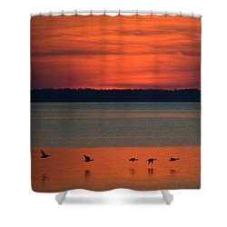 Flying North Shower Curtain