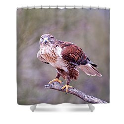 Shower Curtain featuring the photograph Focus by Dan McManus