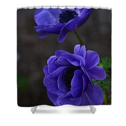 Focused Shower Curtain by Debby Pueschel