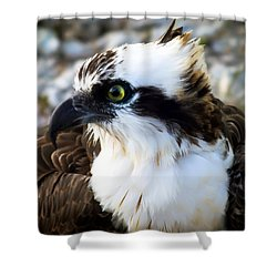 Focused Shower Curtain by Karen Wiles