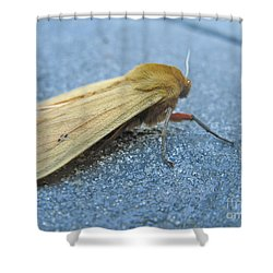 Fokker Moth Shower Curtain