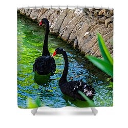 Follow The Leader 2 Shower Curtain