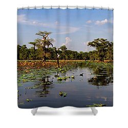 Follow The Markers Shower Curtain by Lana Trussell