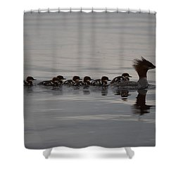 Shower Curtain featuring the photograph Following Mom by James Petersen