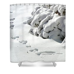 footprints in the Snow Shower Curtain by Rachel Christine Nowicki