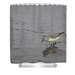 Shower Curtain featuring the photograph Footsteps by James Petersen