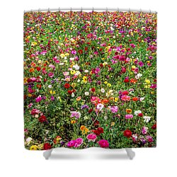 For As Far As The Eye Can See Shower Curtain by Heidi Smith