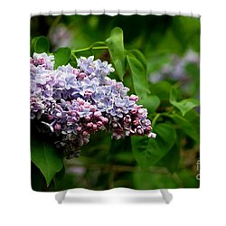 For The Love Of Lilac Shower Curtain
