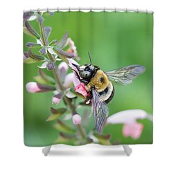 Foraging For Nectar Shower Curtain