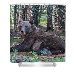 Forest Bear Shower Curtain