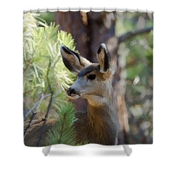 Forest Doe Shower Curtain