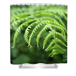 Forest Fern Shower Curtain by Lainie Wrightson