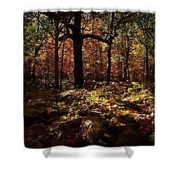 Forest Illuminated Shower Curtain by Linda Unger