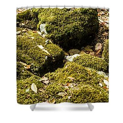 Forest Moss Shower Curtain by Suzanne Luft