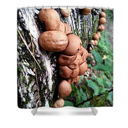 Forest Shrooms Shower Curtain