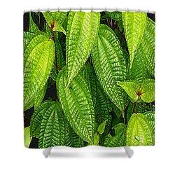 Forever Green Shower Curtain