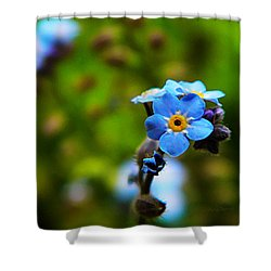 Forget Me Not Bloom Shower Curtain by Chris Berry
