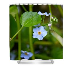Forget Me Not Shower Curtain by John Chatterley