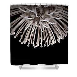 Formation Shower Curtain by Susan Maxwell Schmidt