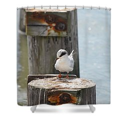 Forster's Tern Shower Curtain by James Petersen