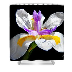 Fortnight Lily Shower Curtain by Mariola Bitner