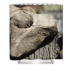Fossil Bone With Weathered Wood Shower Curtain by Rebecca Sherman