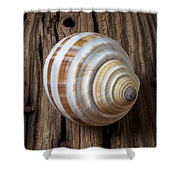 Found Sea Shell Shower Curtain by Garry Gay