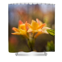 Fountain Of Gold Shower Curtain by Mike Reid
