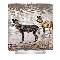 Shower Curtain featuring the photograph Four Alert African Wild Dogs by Liz Leyden