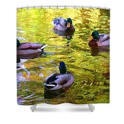 Four Ducks On Pond Shower Curtain by Amy Vangsgard