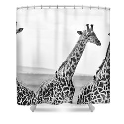 Four Giraffes Shower Curtain by Adam Romanowicz