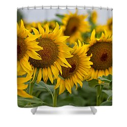 Four Shower Curtain by Ronda Kimbrow