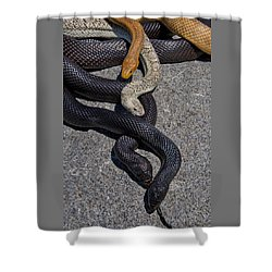 Four Snakes Shower Curtain