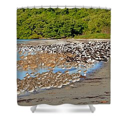 Shower Curtain featuring the photograph Four Species Of Birds At Roost On Tampa Bay Beach by Jeff at JSJ Photography
