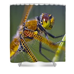Four Spotted Chaser Shower Curtain