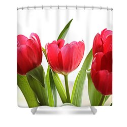 Four Tulips Shower Curtain by Menachem Ganon