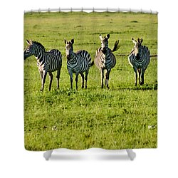 Four Zebras Shower Curtain by Menachem Ganon