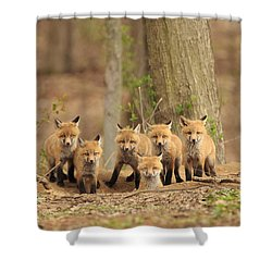 Fox Family Portrait Shower Curtain by Everet Regal