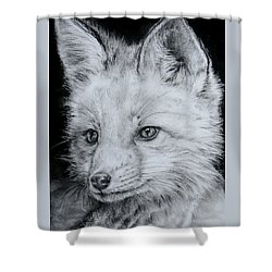 Fox Kit Shower Curtain by Jean Cormier