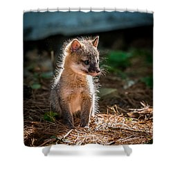 Fox Kit Shower Curtain by Paul Freidlund