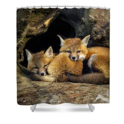 Best Friends - Fox Kits At Rest Shower Curtain by John Vose