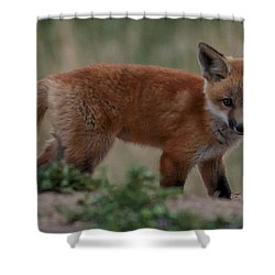 Fox Pup Shower Curtain by Steven Reed
