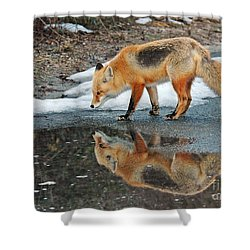 Fox Reflection Shower Curtain by Sami Martin